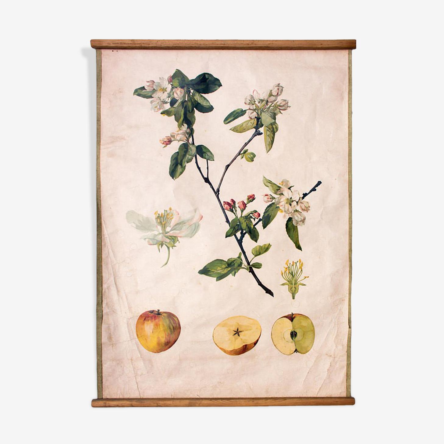 "Poster ""Apple"""
