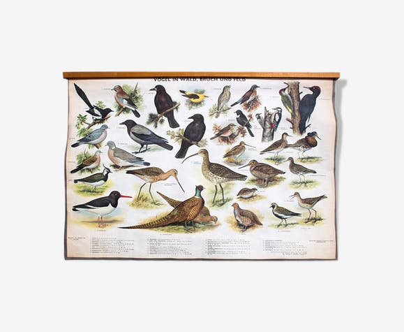 """🔎 Poster """"Birds in the woods"""" graphic education 1953"""